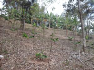 En las imágenes, parte de las cosechas que se siembran en la granja ubicada en el sector Hormigas de Caguas.