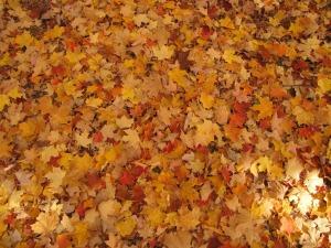 autumn-142192_1280